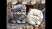Болно Коте - Детска Песничка