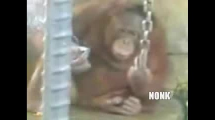 Маймуна С Масур