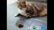 Най-смелата Мишка