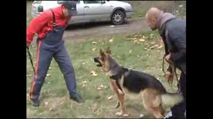 Dog Training Burgas.wmv