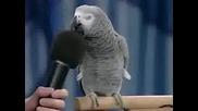Не сте виждали такъв папагал