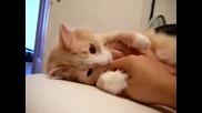 Много Сладко Коте