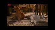 напушени котки