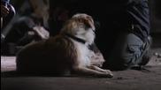 Историята на едно изоставено куче
