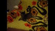 Мишка и котка Смях!