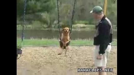 Куче Се люлеее на Люлка !