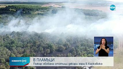 пожарГорят стотици декари гора в Хасковско