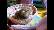 O gatinho mais fofo do mundo.wmv