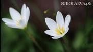 Пролетна благодат