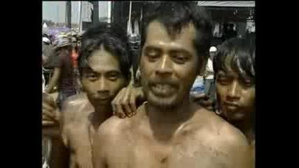Катерене по палми в Индонезия