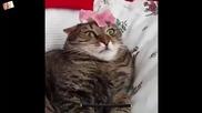 Тази котка Цепи Мрака (смях)