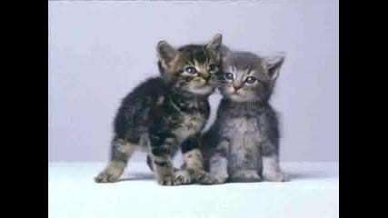 Сладички Котенца И Кученца