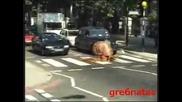 За всички Българи които Не спират на пешеходна пътека