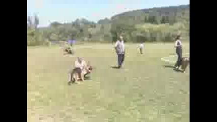 Рударци специализирана изложба за германски овчарски кучета 2009 2