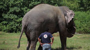 'World's loneliest elephant' Kaavan to find company in Cambodia
