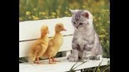 Искам куче, искам коте - Детска песничка