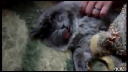 Е такава котка не сте виждали