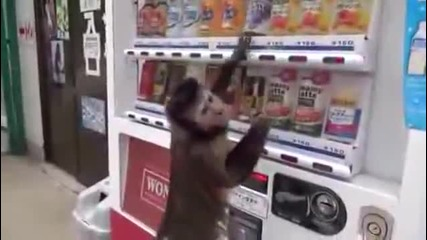 Жадна маймуна си купува освежаваща напитка от автомат в Nihonmatsu, Япония