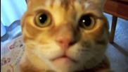 супер котки 2