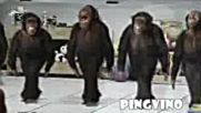 Смях - Маймуни Играят Хоро