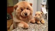 Най-сладките породи кученца!