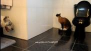 Котка бие куче докато се вози на прахосмукачка