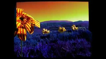 D-12 - Purple Hills