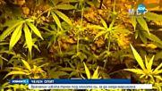 Врачанин изкопа тунел под леглото си, за да отглежда марихуана