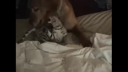 Бой Между Котка и Куче