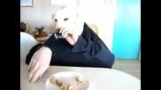 Закусването на човекът - куче