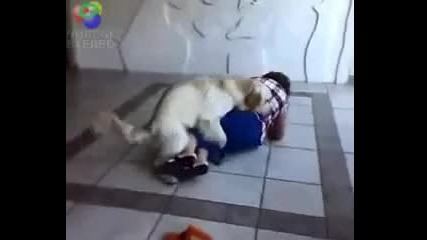 Луд С М Я Х .. Куче се опитва да изнасили жена !!