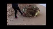 Какво чудо изхвърли океана