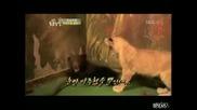 Малко лъвче плаши малка мечка!големи сладури!