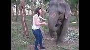 Слон хитро се закача с туристка