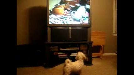Куче Гледа Animal Planet 2