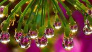 Стас Намин - Цветы