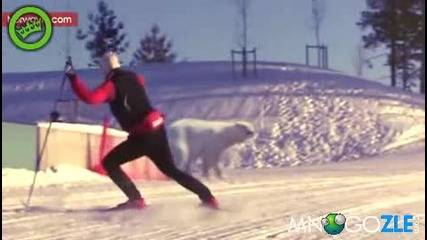 Защо норвежците са толкова бързи на ски