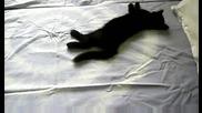 л - черно коте 3.08.2009 Dsci0022