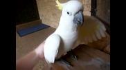 Лаещ папагал 0_о