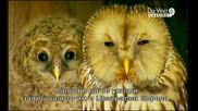 Патилата на Совата Owl s Odyssey