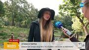 АТАКА В ПАРКА: Домашно куче нападна млада жена