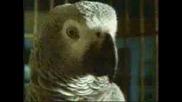 Папагали - Wazaaaa