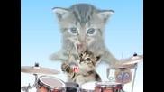 Сладки Клипче С Пеещи Котенца