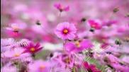 За всеки стръкче от любимото цвете! ... ...