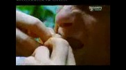Bear Grylls Eats Some Worms - Ultimate Survival