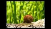 Minuscule - The big race