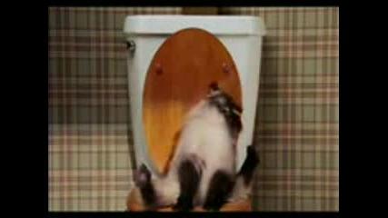 Котка и тоалетна