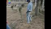 Пиян Мъж Пикае На Ограда По Която Тече Ток