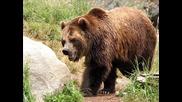 Иван Пехливана и мечка стръвница