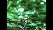 Пропуск на жаба да хване насекомo на забвен кадър